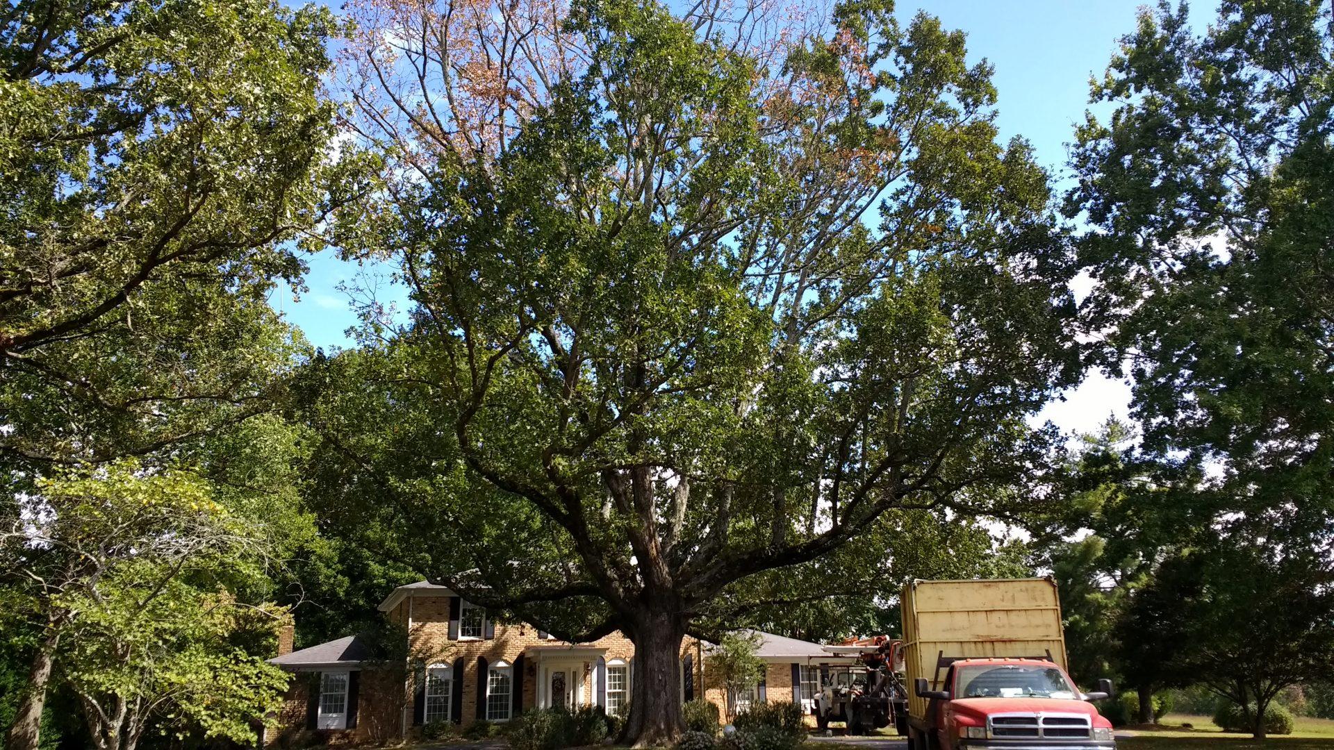 tree trimming, limb removal, tree near house