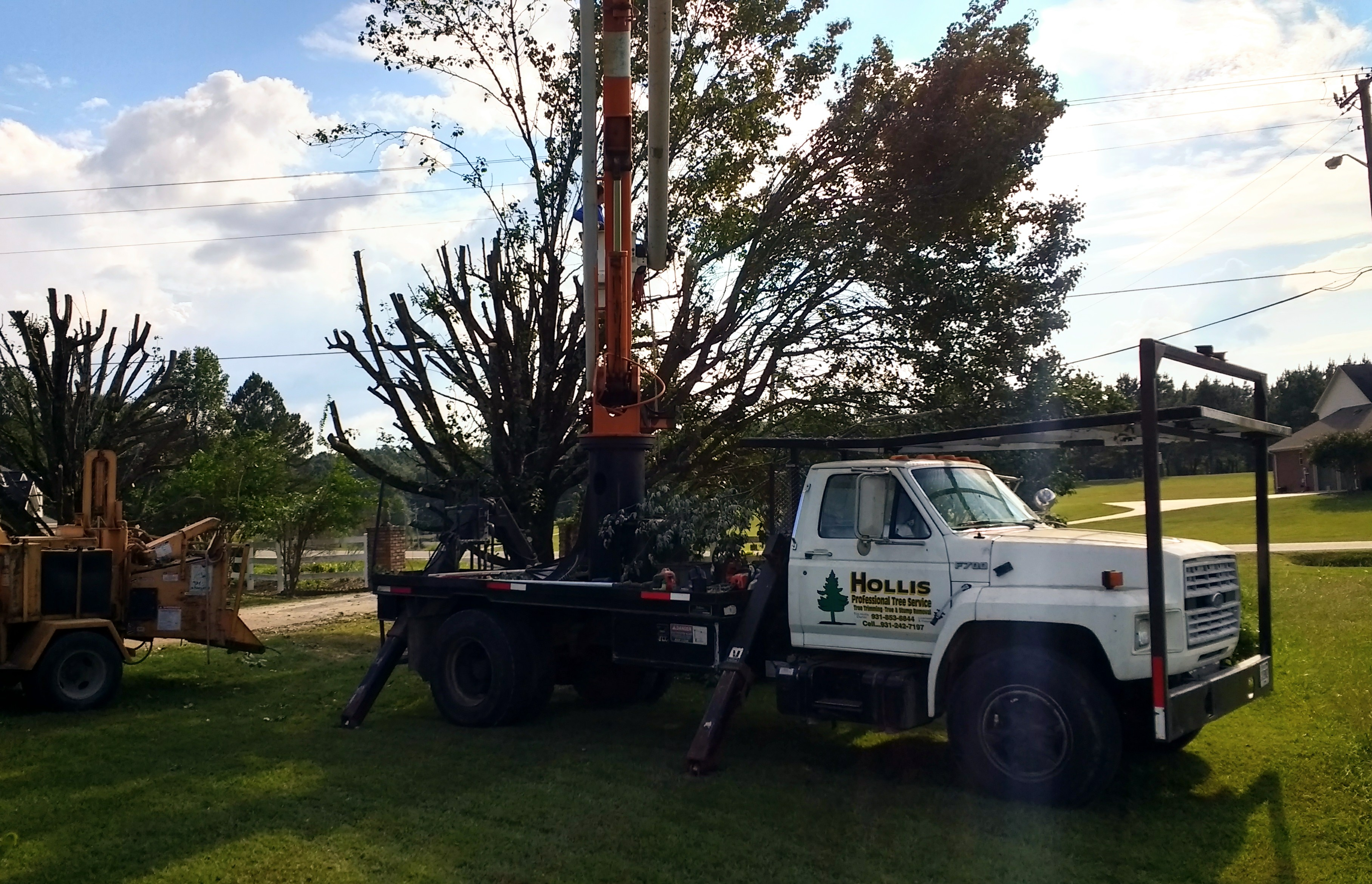 tree service, local tree service, tree removal, stump grinding, tree trimming