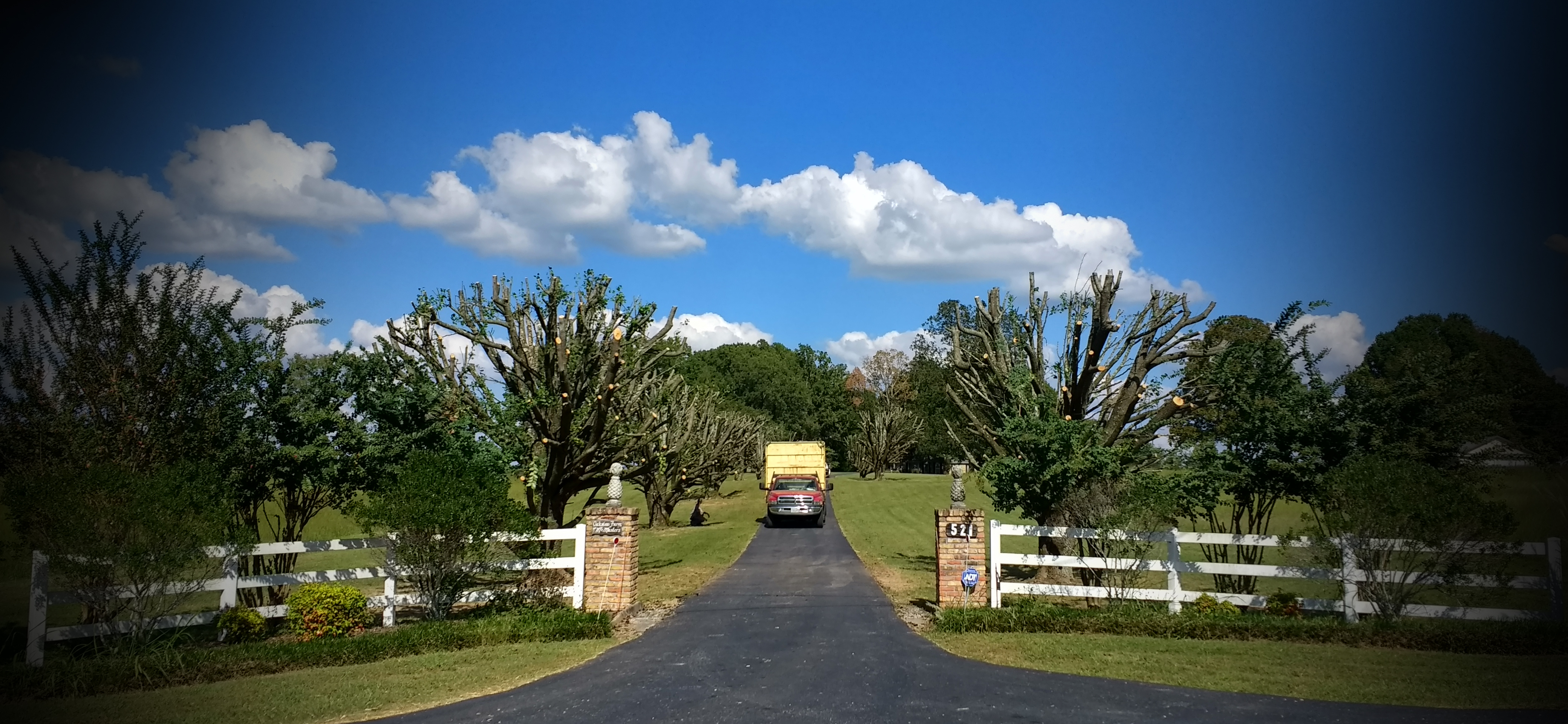 Services by Hollis Professional Tree Service