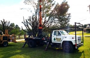 tree service, local tree service, feel comfortable about who you hire