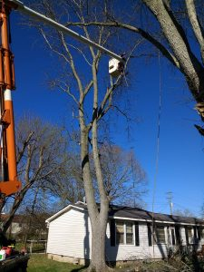 Tree Removal with No Clean-up - Before