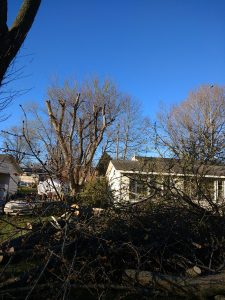 Tree Removal with No Clean-up - After