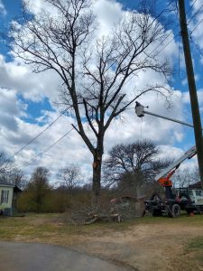 Tree Removal - Before