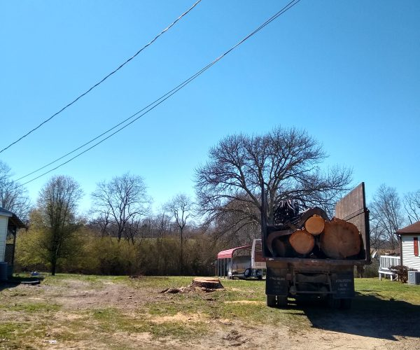 Tree Removal - After